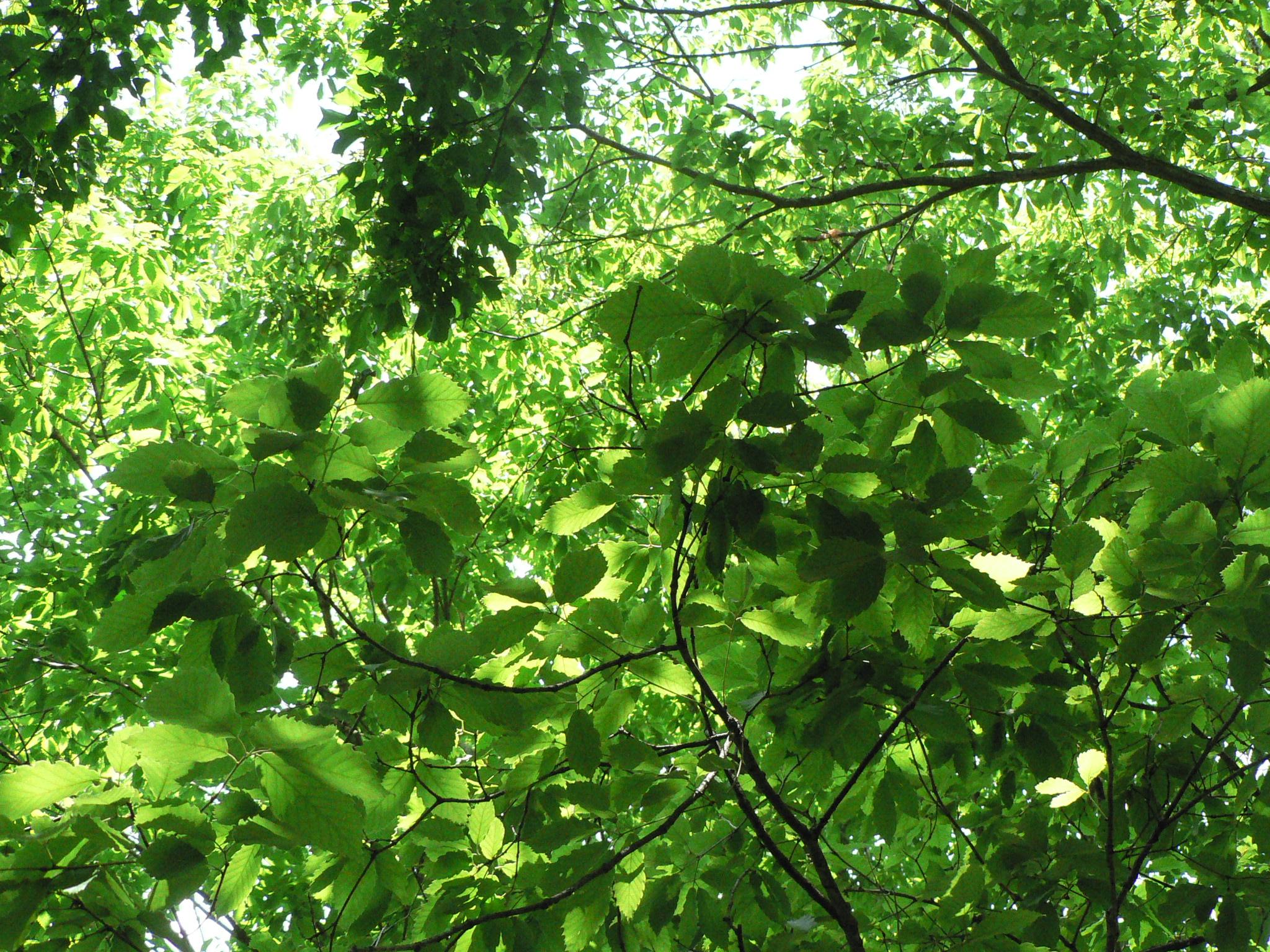 那須高原の森の緑