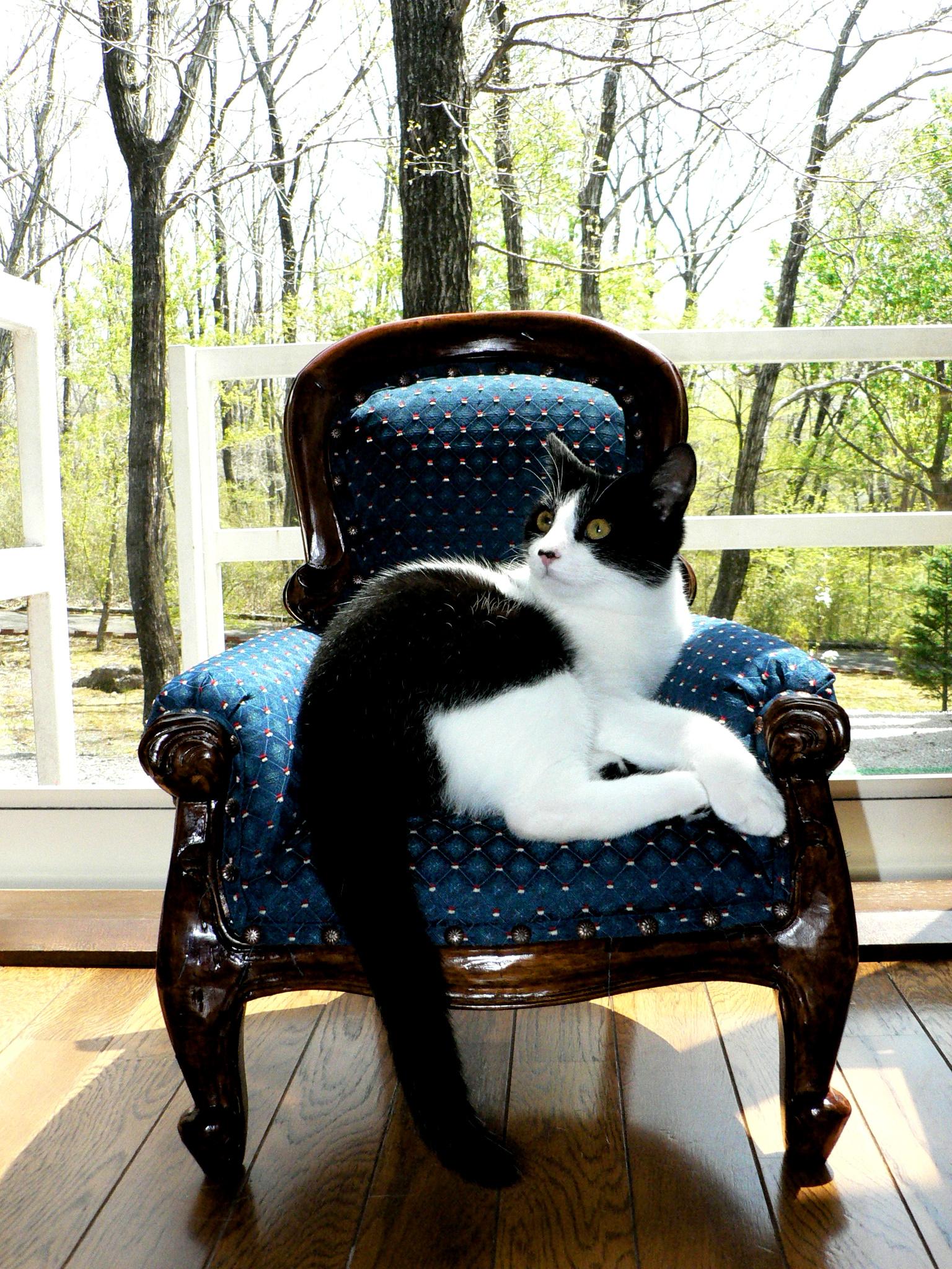 王様のイスに座るクッキー