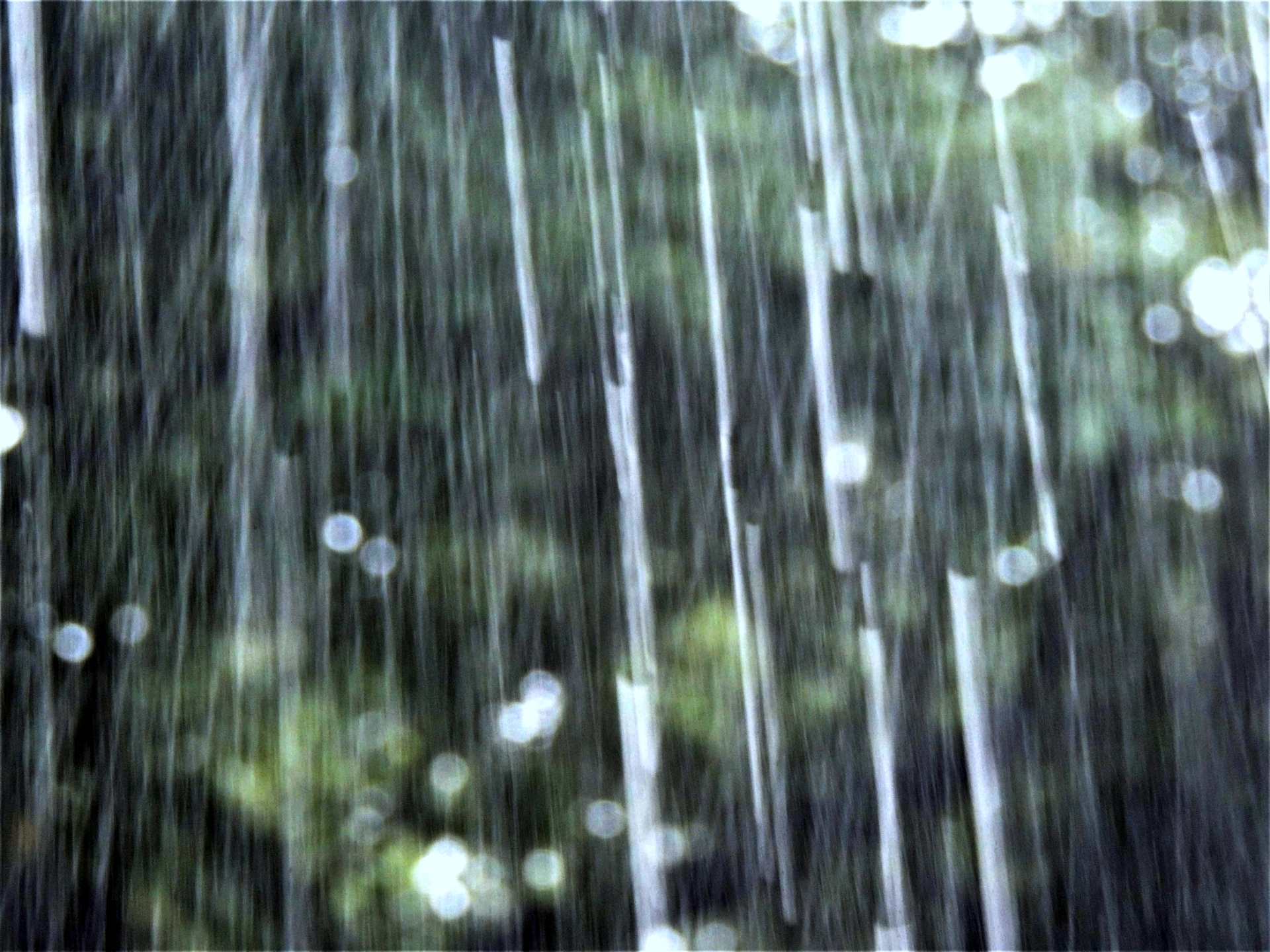 集中豪雨image