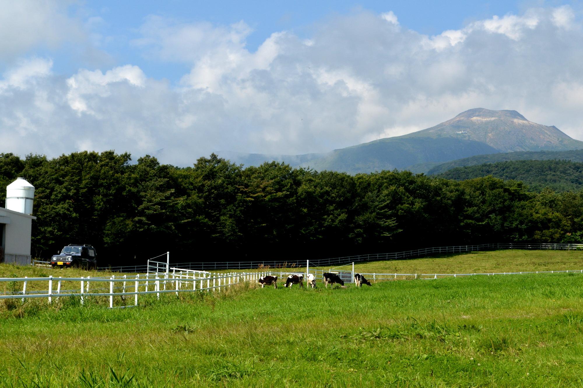 那須高原の那須共同牧場