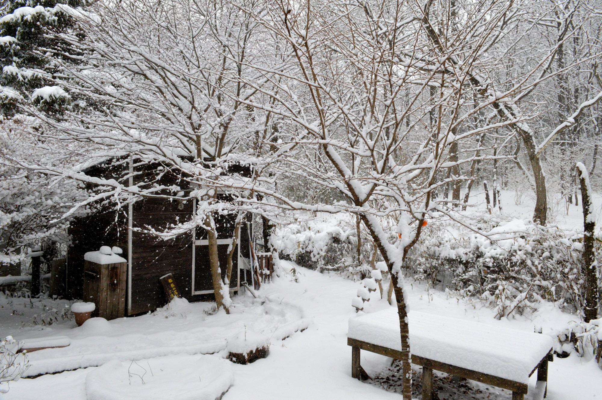 那須高原の積雪10cmの庭