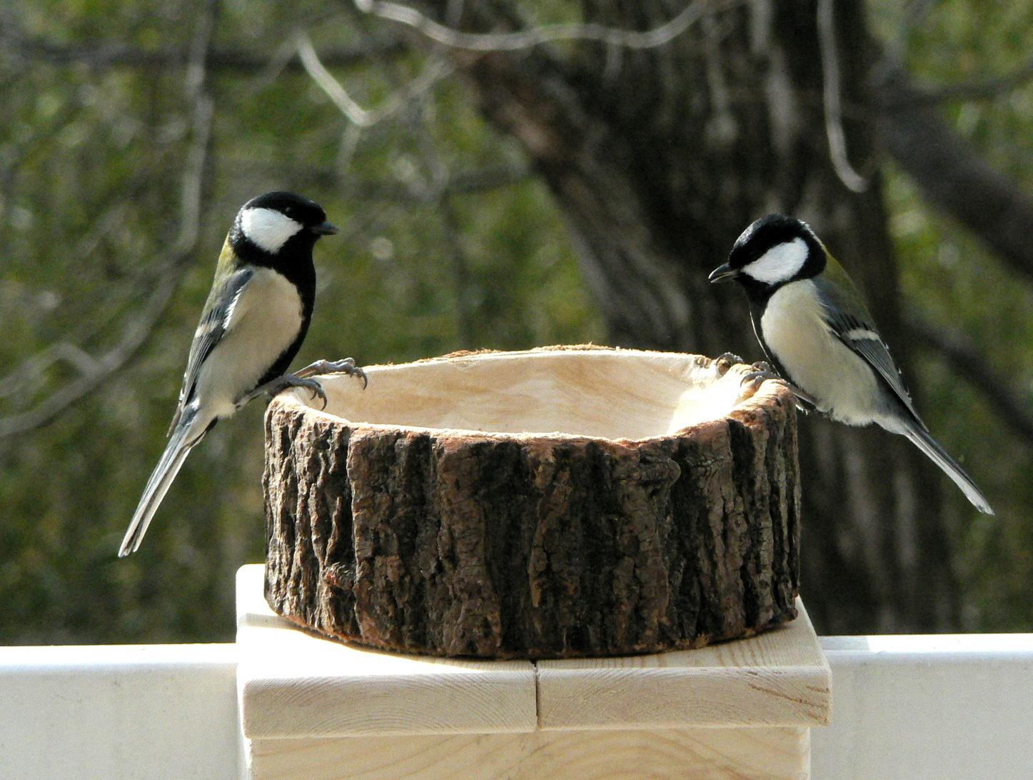野鳥シジュウカラ2