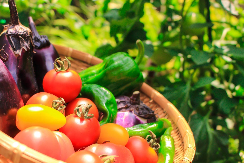 那須高原の地産地消の野菜