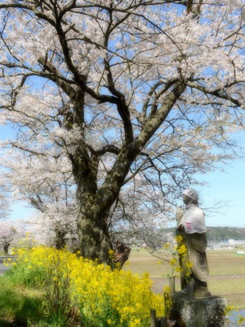 さくら市喜連川の早乙女桜並木のお地蔵さん
