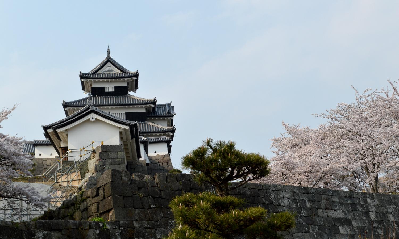 白河市小峰城の桜と崩壊した石垣