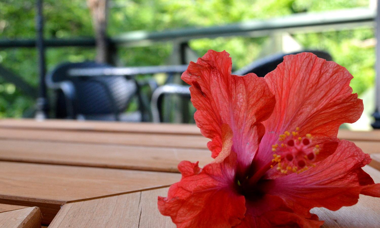 那須高原ハワイアンのラナイカフェimage