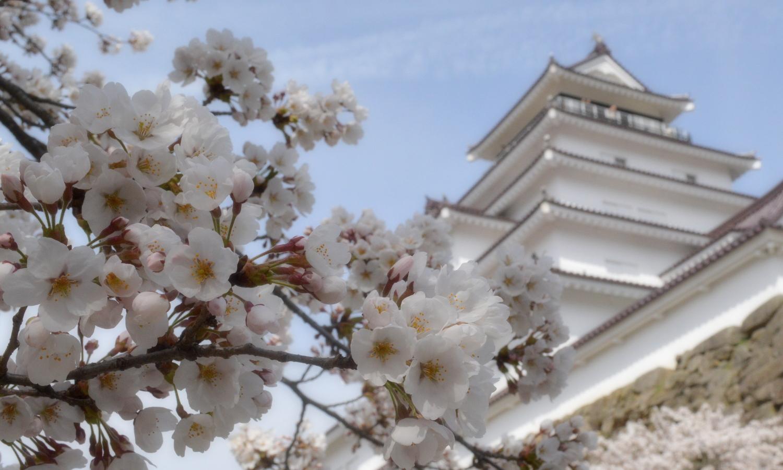 会津若松鶴ヶ城の桜とお城