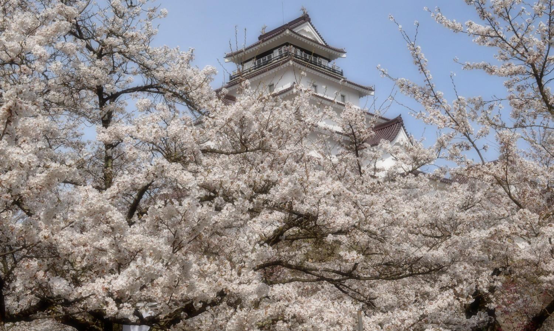会津若松鶴ヶ城の桜に埋め尽くされる天守閣