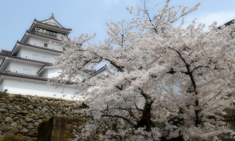 会津若松鶴ヶ城の天守閣は桜が似合う
