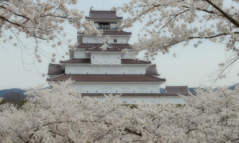 会津若松鶴ヶ城の天守閣を埋め尽くす桜