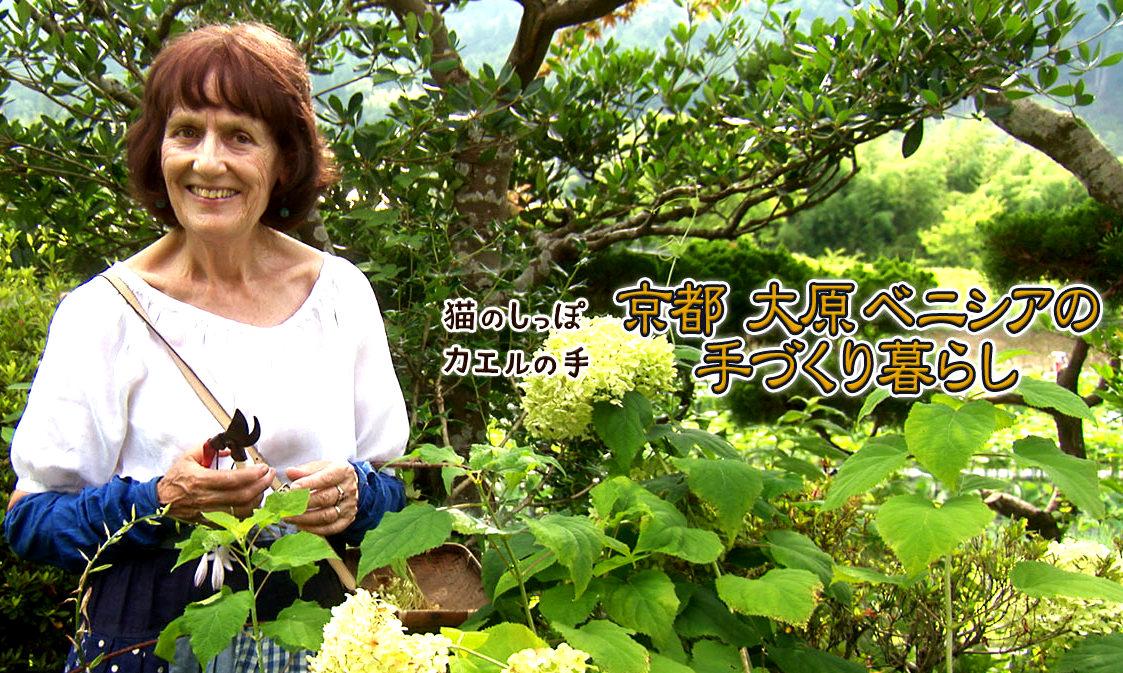 NHK,猫のしっぽカエルの手