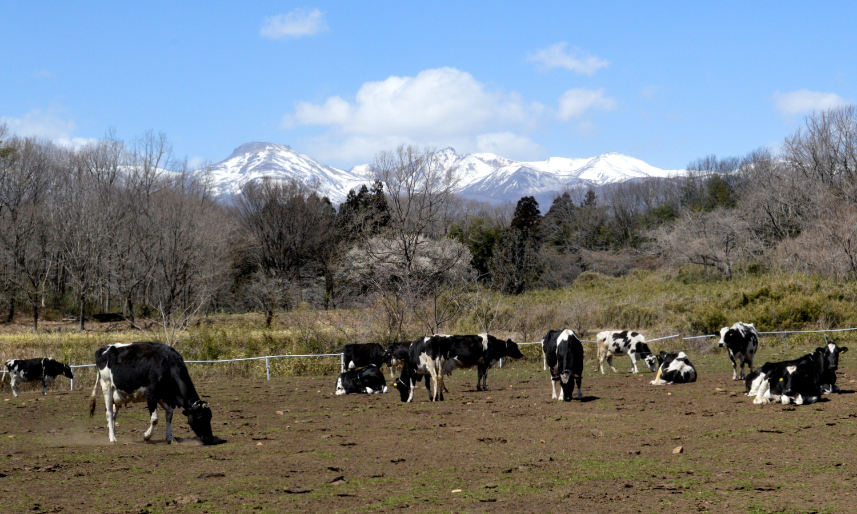 那須高原はりねずみ堂は真庭ファームのすぐ近く