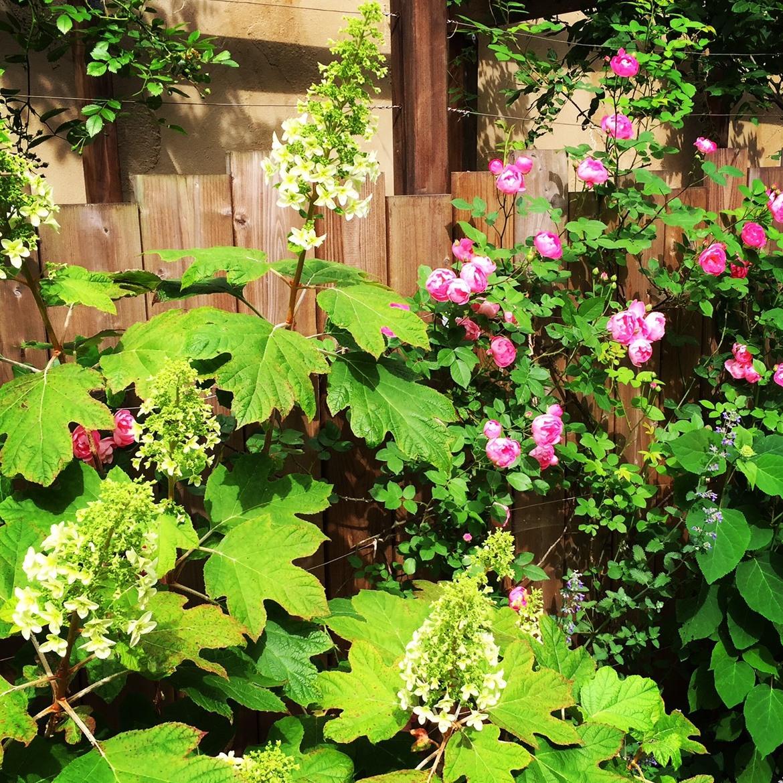 mai+Garden5-001