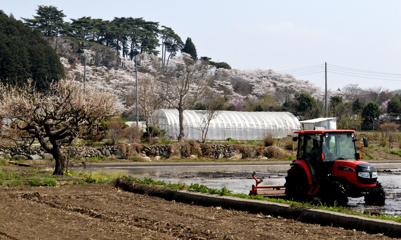 田んぼの準備が進む愛宕山公園の桜