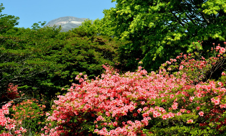 那須茶臼岳とのコラボが美しい八幡のツツジ