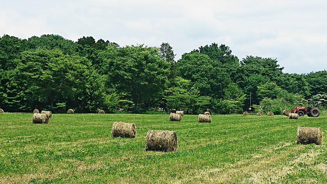 那須高原の牧草の刈り取り