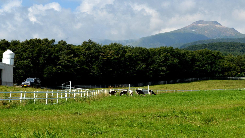 那須高原の放牧風景