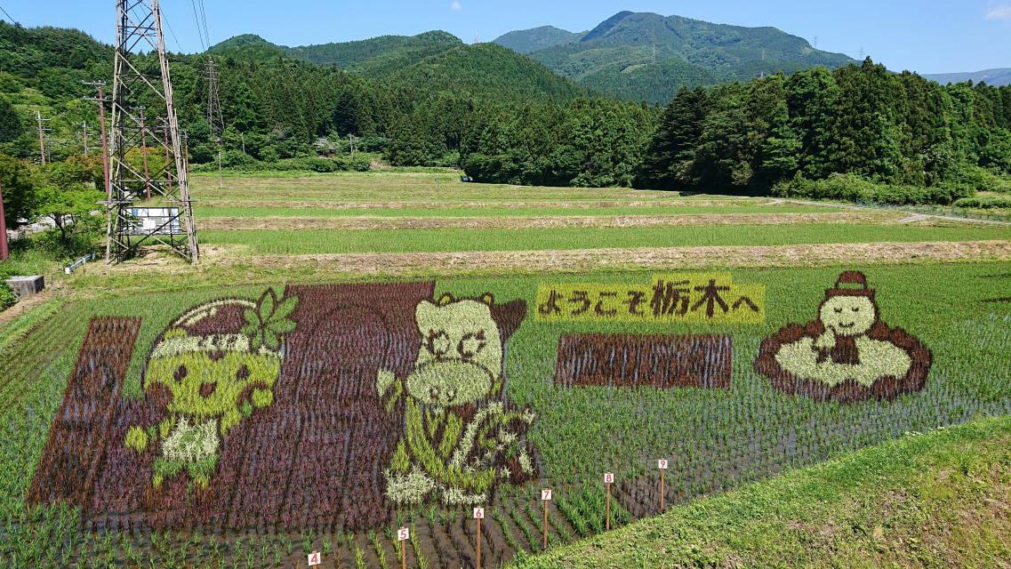 那須塩原関谷の田んぼアート