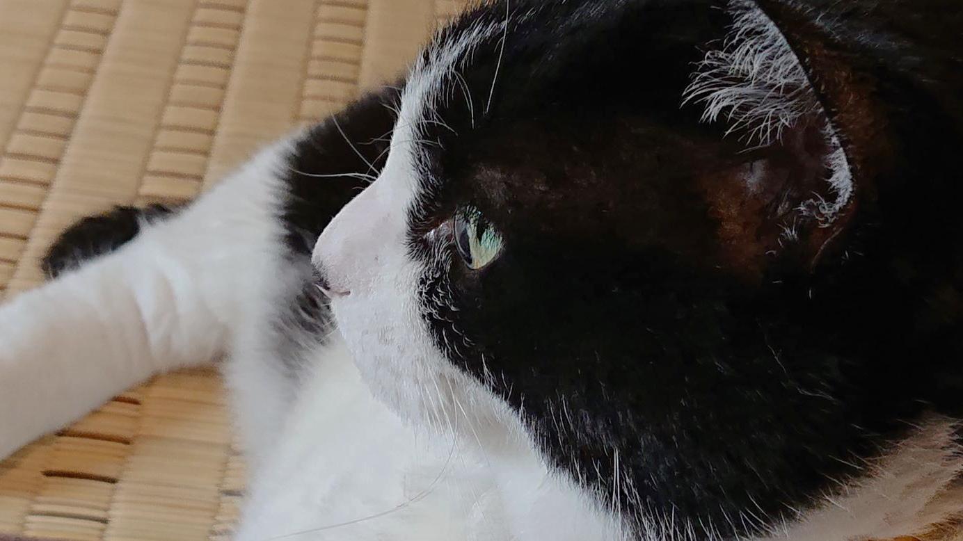 クッキーの澄んだ瞳