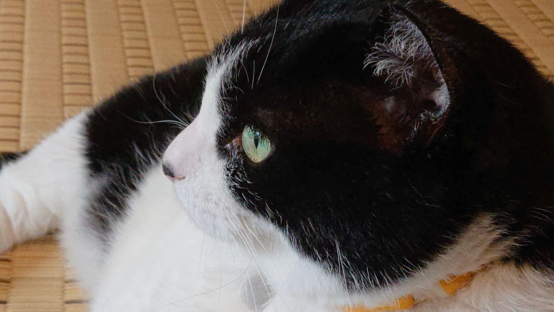 クッキーの瞳は緑