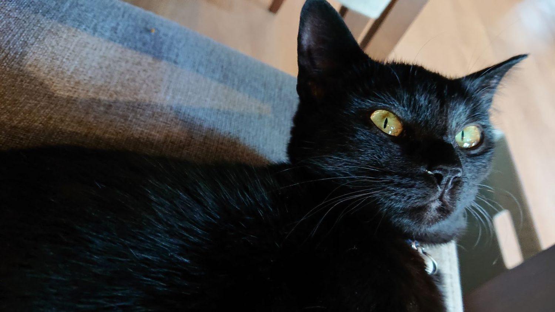 那須クレシオンカフェの黒猫ロニー