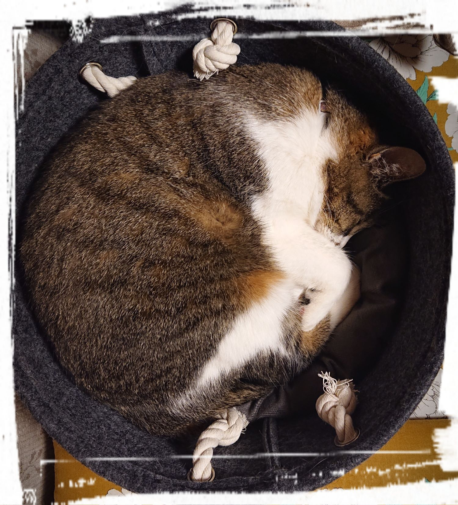 円形ベッドでスヤスヤのchip