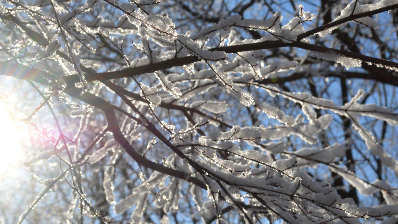 那須高原の雪景色2020