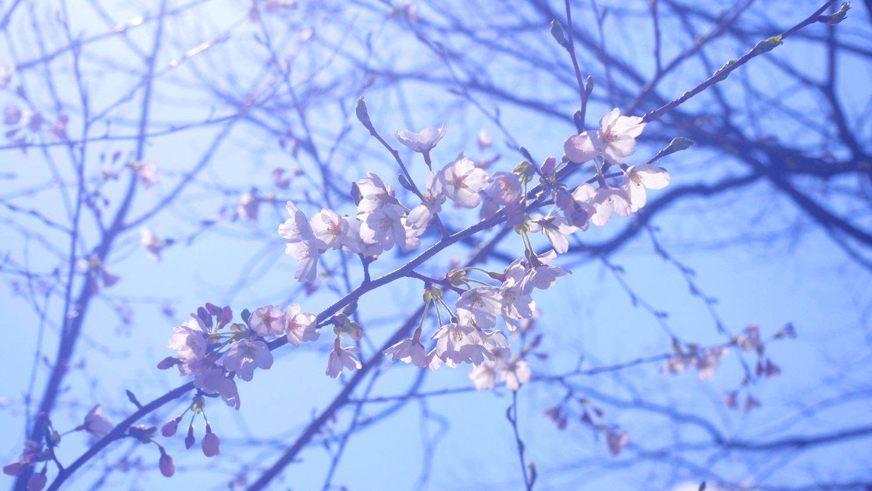 那須高原の春の散歩